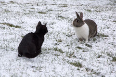Coniglio e gattino su un giardino nevoso Fotografie Stock