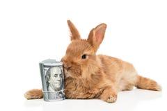 Coniglio e un pacco di soldi Fotografie Stock