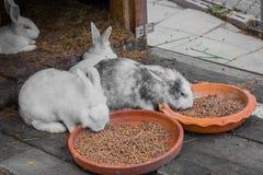 Coniglio ed alimento Fotografia Stock Libera da Diritti