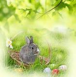 Coniglio ed uova di Pasqua Immagine Stock Libera da Diritti