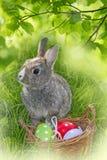 Coniglio ed uova di Pasqua Fotografia Stock Libera da Diritti