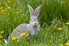 Coniglio in erba immagini stock libere da diritti