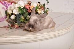 Coniglio fatto a mano sveglio grigio Immagini Stock Libere da Diritti