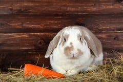 Coniglio in fieno con la carota fotografia stock