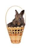 Coniglio grigio del bambino in un cestino Immagine Stock