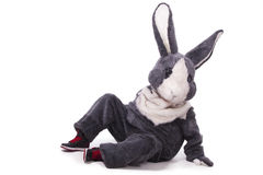 Coniglio grigio divertente Fotografie Stock Libere da Diritti