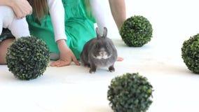 Coniglio grigio in studio con i bambini irriconoscibili archivi video