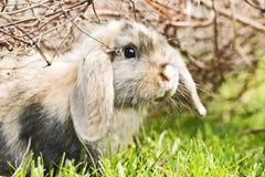 Coniglio nel giardino Fotografia Stock