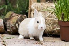 Coniglio nel giardino Immagini Stock Libere da Diritti