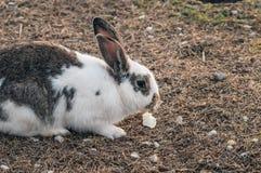 Coniglio nel parco sull'erba immagine stock libera da diritti