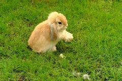 Coniglio nel verde Fotografia Stock Libera da Diritti