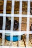 Coniglio nella gabbia Allevamento degli animali domestici Fotografie Stock