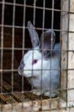 Coniglio nella gabbia Allevamento degli animali domestici Immagini Stock
