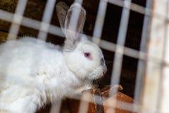 Coniglio nella gabbia Allevamento degli animali domestici Fotografia Stock Libera da Diritti