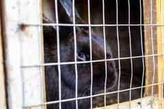 Coniglio nella gabbia Allevamento degli animali domestici Immagine Stock
