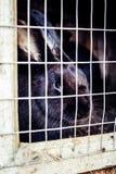 Coniglio nella gabbia Allevamento degli animali domestici Immagine Stock Libera da Diritti