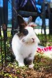 Coniglio nella gabbia coniglietto Immagine Stock