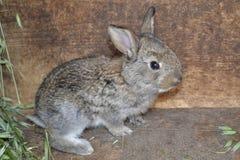 Coniglio nella gabbia - piccolo coniglietto, azienda agricola della campagna Fotografie Stock