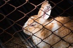 Coniglio nella gabbia thailand fotografia stock