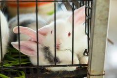 Coniglio nella gabbia thailand fotografie stock