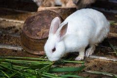 Coniglio nella gabbia thailand fotografia stock libera da diritti