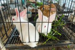 Coniglio nella gabbia thailand immagini stock libere da diritti