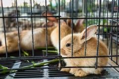 Coniglio nella gabbia thailand immagine stock