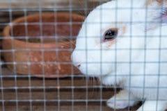 Coniglio nello zoo thailand fotografia stock libera da diritti