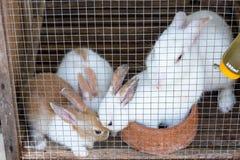 Coniglio nello zoo thailand immagine stock