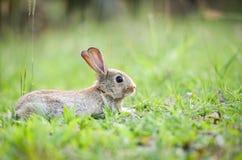 Coniglio sveglio che si siede sulla caccia verde del prato della molla del campo/coniglietto di pasqua per il festival fotografia stock