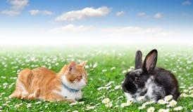Coniglio sveglio con il gatto Fotografia Stock