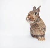 Coniglio sveglio di Cheerfull su un fondo bianco che ci esamina Immagine Stock