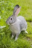 Coniglio sveglio di pasqua Fotografie Stock Libere da Diritti