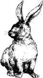Coniglio sveglio disegnato a mano Immagine Stock Libera da Diritti