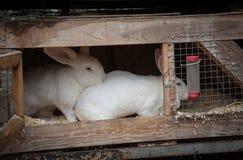 Coniglio in una gabbia Fotografia Stock Libera da Diritti