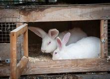 Coniglio in una gabbia Immagini Stock Libere da Diritti