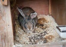 Coniglio in una gabbia Fotografia Stock