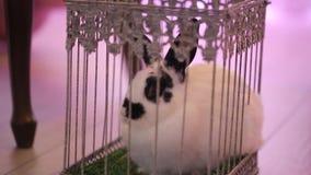 Coniglio in una gabbia su una festa video d archivio