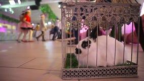 Coniglio in una gabbia su una festa stock footage