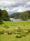 Coniston Water Royalty Free Stock Image