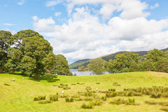 Coniston Water Meadow Stock Image