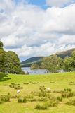 Coniston Water Meadow Stock Photos