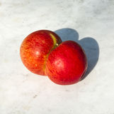 Conjoined apples Stock Images