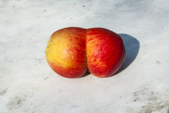Conjoined apples Stock Photography