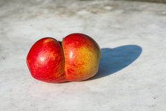 Conjoined apples Royalty Free Stock Photos