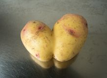 Conjoined potato on a stainless steel kitchen sink. Conjoined Siamese potato on a stainless steel kitchen sink with copy space. Potential use as wonky / ugly stock photography