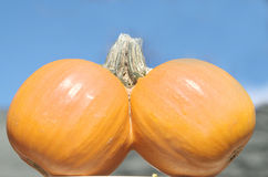 Conjoined Pumpkins Royalty Free Stock Photography