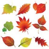 Conjunto 2 de hojas de otoño. Acción de gracias