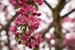 Conjunto bonito da flor Imagens de Stock Royalty Free