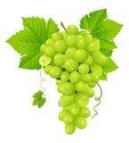 Conjunto da uva branca Imagens de Stock